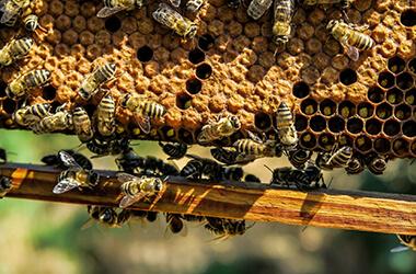 DIY Bienenwachstücher